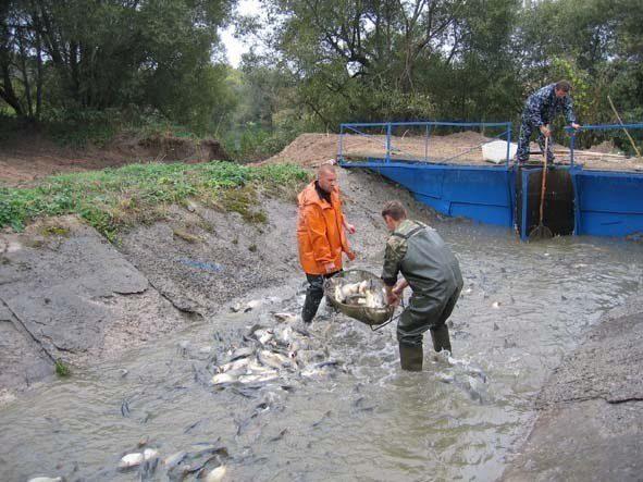рыбалка под кимовском